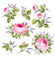 vintage rose set vector image vector image