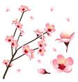 prunus persica - peach flower blossom vector image