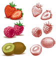 strawberry raspberry and kiwi vector image vector image