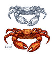 crab seafood isolated sketch icon vector image