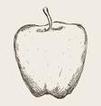 fruit drawn design vector image