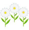 flower chamomile isolated vector image vector image