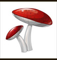 cartoon coloured mushroom isolated on white vector image