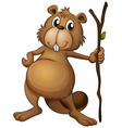 A beaver holding a stem vector image vector image