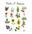 plants of america vector image vector image
