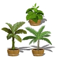 Tropical plants in buckets for office and home vector image vector image