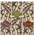 hand drawn cashew banners Engraved vector image