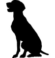 german pointer vector image