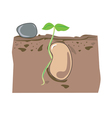 seed growth vector image