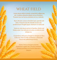 Wheat field concept with space for text vector image