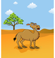 camel in the savanna vector image vector image