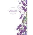 Lavender flowers banner vector image
