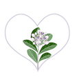 Purple Calotropis Gigantea Flowers in Heart Shape vector image
