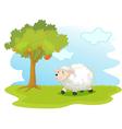 Sheep field vector image vector image