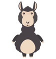 black alpaca on white background vector image