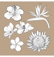 Tropical flowers - hibiscus protea plumeria vector image