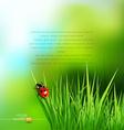 Green grass and ladybug vector image