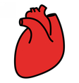 Red human heart vector image