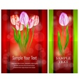 Tulip flowers on red vector image vector image