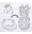Fruit cherry mango pineapple vintage vector image