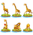 Giraffes in different actions on island vector image