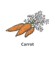 hand-drawn carrots with tops vector image