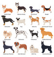 colored purebred dogs icon set vector image