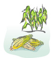 Corn vector image