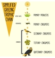 Simplified grazing trophic chain vector image