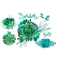 Cute succulent vignettes vector image