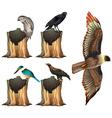 Wild birds on log vector image
