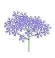 Bunch of Violet Rose Geranium vector image