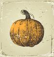 hand drawn pumpkin vector image