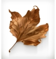 Dry maple leaf vector image vector image