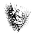 Hand sketch frogs vector image