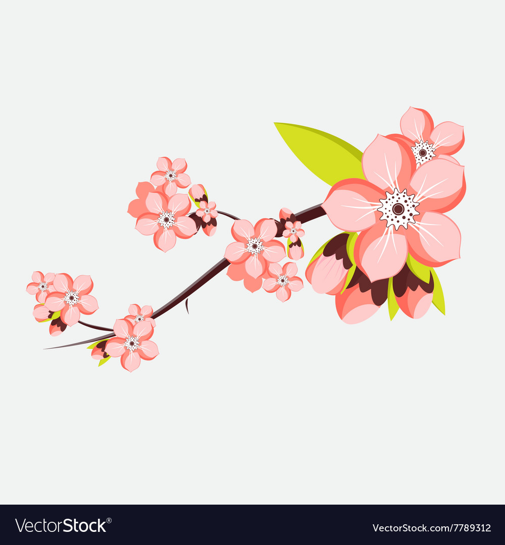 Almond or apricot branch in blossom isolated on vector