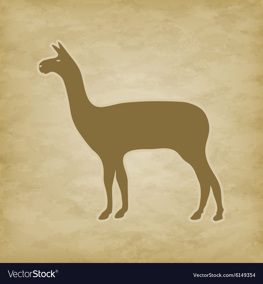 Lama on grunge background vector