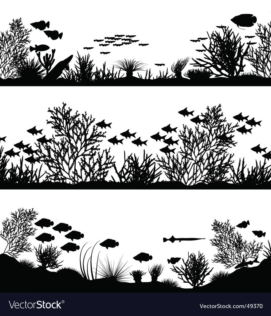 Coral foregrounds vector
