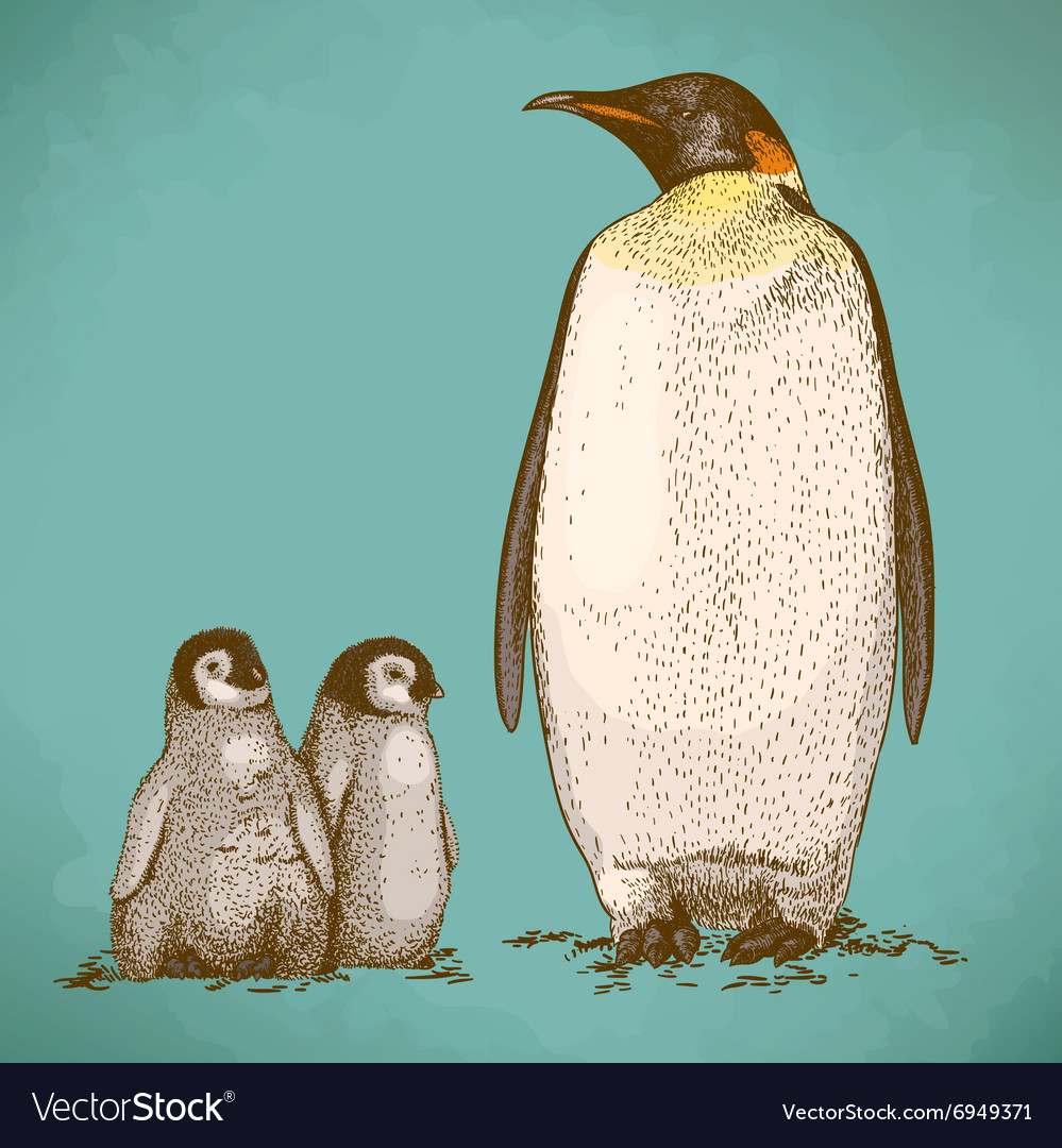 Engraving penguins retro vector