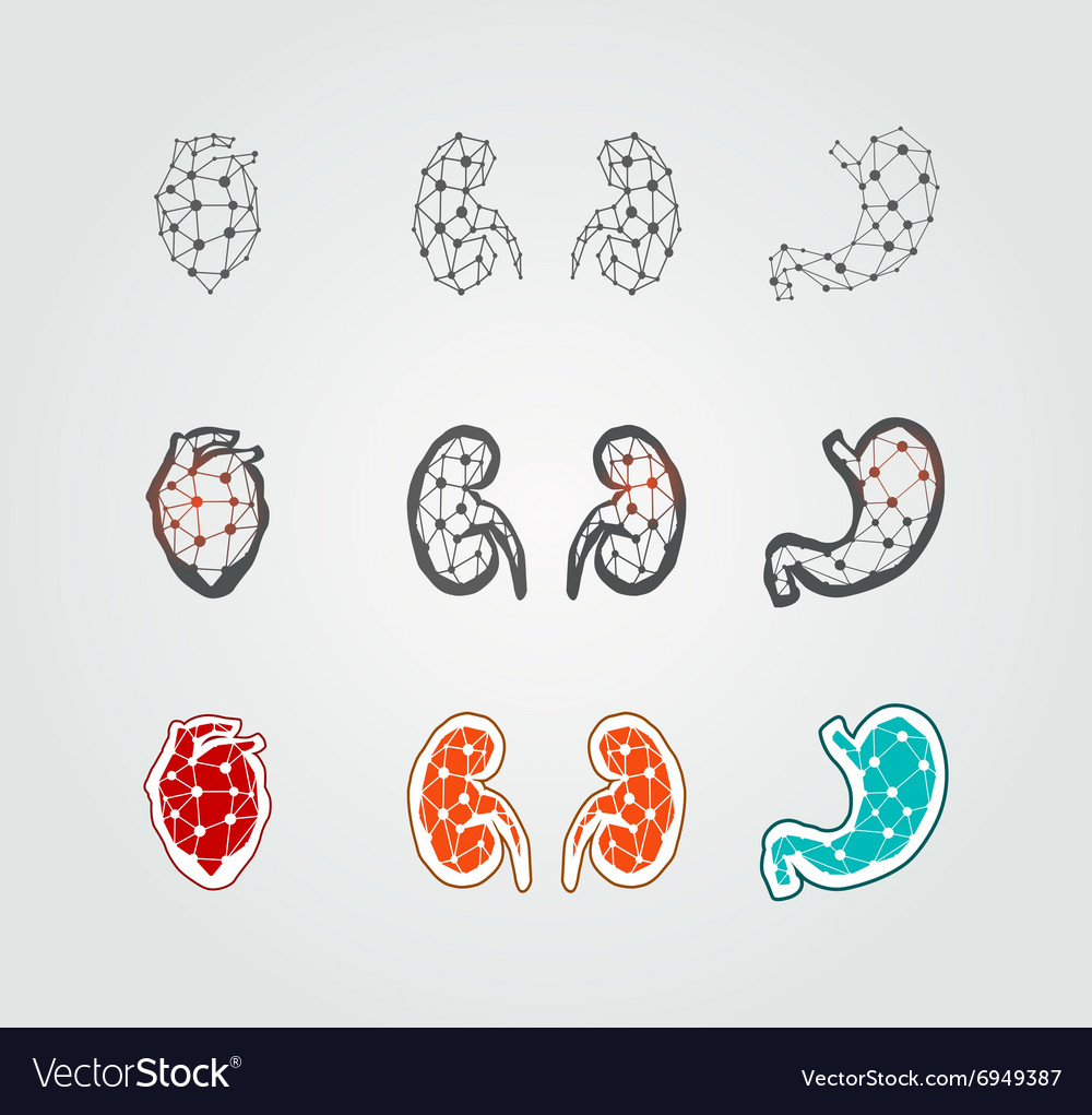 Stylized human organs icons vector