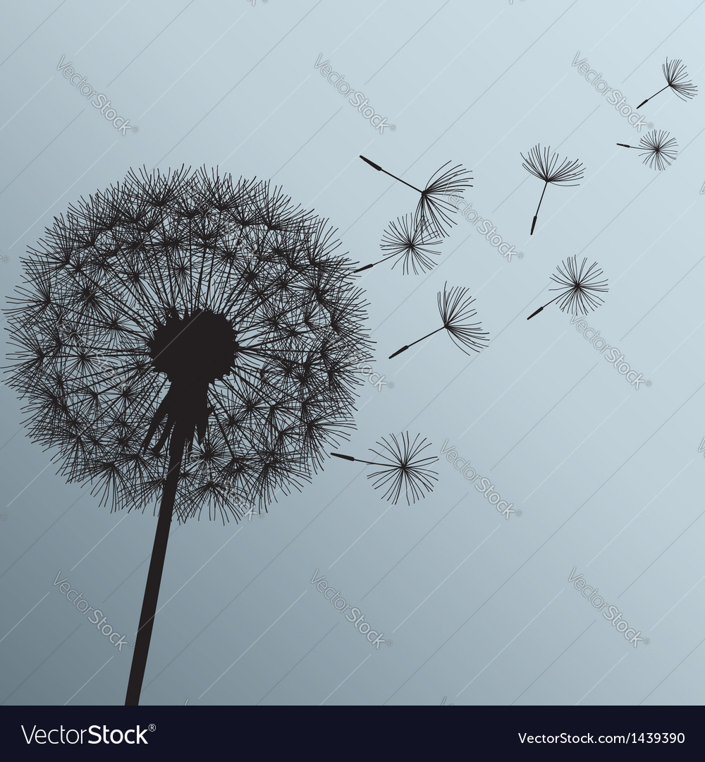 Flower dandelion on gray background vector