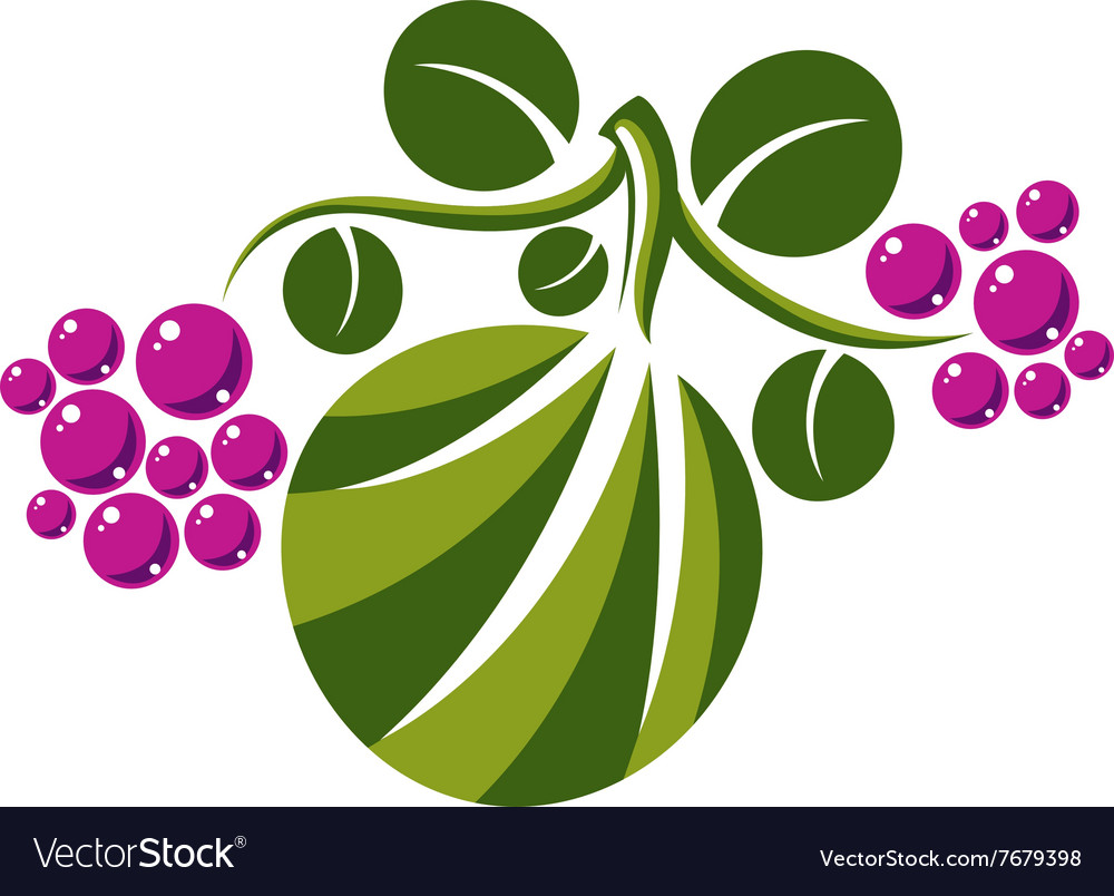 Flat green leaf with tendrils and purple seeds vector