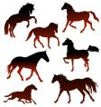 stallions vector image vector image