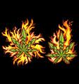 Marijuana cannabis leaf fire flames background vector image