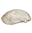 engraving clam shell vector image vector image