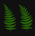 green fern leaf set vector image