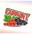 Currant still life vector image