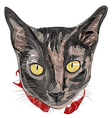 Hand drawn Kitty Face vector image