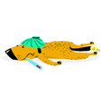 sick dog the aching sad dog lies with the vector image