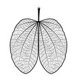 leaf black contour on white background vector image